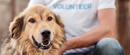 Sei un medico veterinario e ti occupi di animali da compagnia? Collabora al progetto sul rischio zoonosi nelle strutture di ricovero per cani e gatti