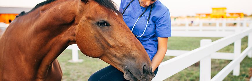 Epidemia di EHV-1 in Europa. Prime indicazioni operative sulla diagnosi di possibili casi sospetti