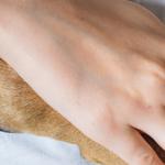 Gli Interventi Assistiti con gli Animali nella normativa regionale italiana. Disponibile un report riassuntivo