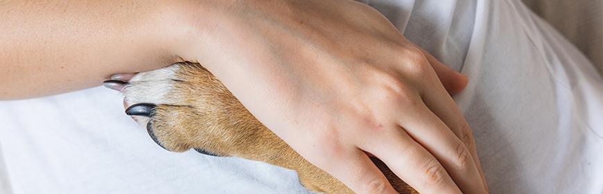 Gli Interventi Assistiti con gli Animali nella normativa regionale italiana. Ora disponibile un report riassuntivo