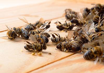 api morte eutanasia
