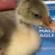 Webinar sulla medicina forense veterinaria, giovedì 10 giugno 2021