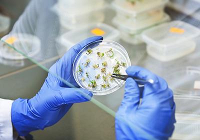 analisi di laboratorio su matrice vegetale