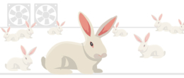 Corso ECM online / Benessere del coniglio in allevamento