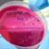 Isolato ceppo appartenente ad un nuovo sierotipo di Salmonella