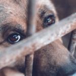 Appunti di scienza: medicina forense veterinaria [Opuscolo]