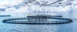Acquacoltura europea sostenibile, parola di FutureEUAqua