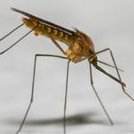 Presenza di zanzare appartenenti al complesso Maculipennis nella Pianura Padana