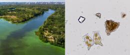 Nel 39° video della serie IZSVe «100 secondi» un'introduzione ai rischi che comportano le biotossine algali