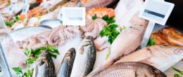 Le frodi alimentari nei prodotti ittici [Video]