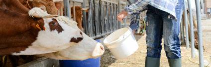 Ricercatori dell'IZSVe premiati per i metodi innovativi nella rilevazione di trattamenti anabolizzanti nei bovini