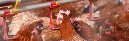 Che acqua bevono i nostri animali? La qualità dell'acqua di abbeverata negli allevamenti veneti