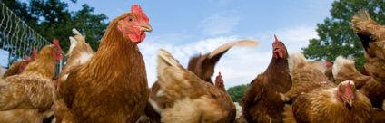 Corso ECM / La leptospirosi negli animali da compagnia e il suo impatto sulla sanità animale