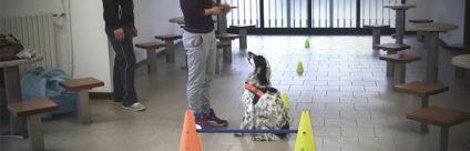 Terapia assistita con gli animali in carcere, si replica