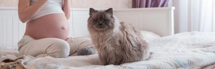 Toxoplasmosi: il gatto è davvero un rischio per la gravidanza? [video]
