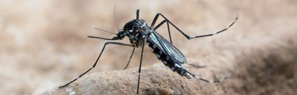 Zanzare aliene
