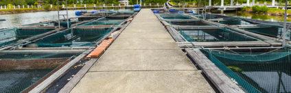 Modello per applicare la sorveglianza basata sul rischio negli allevamenti ittici