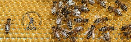 News COLOSS | Associazione ricerca apicoltura