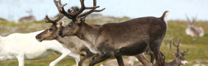 Chronic Wasting Disease nei cervidi: primo caso in Europa