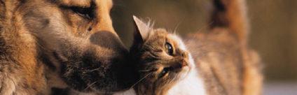 IZSVe Pets, nuovo portale per la veterinaria degli animali da compagnia