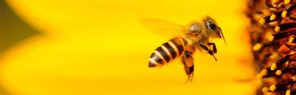 Il Centro di referenza nazionale per l'apicoltura al Congresso Apimondia 2019, dal 13 al 15 febbraio a Roma
