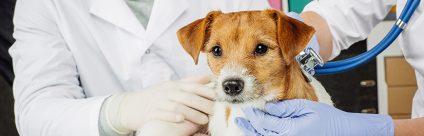Aggiornato l'elenco degli esami diagnostici per animali da compagnia