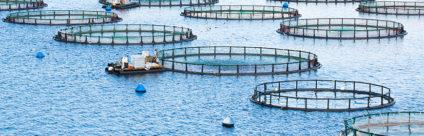 MedAID: l'acquacoltura sostenibile nel Mediterraneo si può fare!