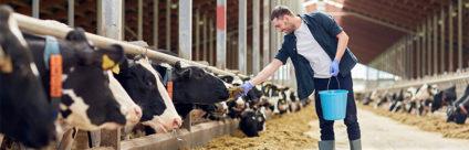 PROBOV, valorizzazione delle produzioni bovine attraverso lo sviluppo di un processo sanitario razionale e innovativo