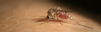 West Nile virus in Veneto: facciamo chiarezza