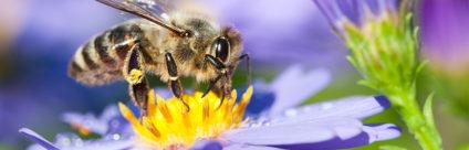 La «Carta di San Michele all'Adige», un appello per la tutela della biodiversità delle sottospecie autoctone di Apis mellifera in Italia