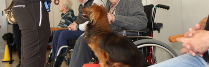 Pet therapy in residenze per anziani: un team francese in visita a Trento