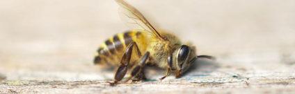 Lo stato di salute delle api in Italia. Risultati dal monitoraggio nazionale