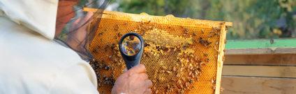 Convegno / Problematiche emergenti in apicoltura: autenticità del miele, Vespa velutina e Aethina tumida