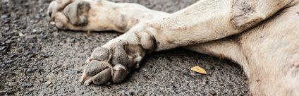 Corso ECM / Avvelenamenti animali, un decennio di applicazione di misure nazionali di controllo